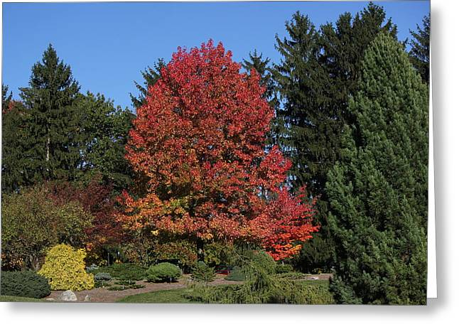 Autumn Scene Greeting Card by Bill Woodstock