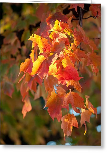Autumn Greeting Card by Sebastian Musial