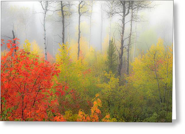 Autumn Silence Greeting Card by Leland D Howard