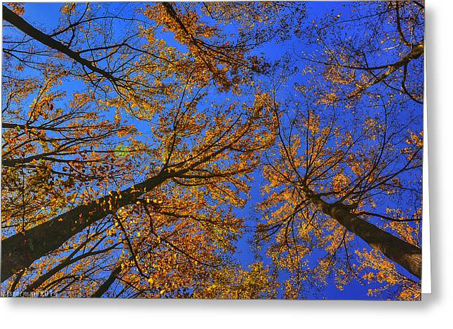 Autumn Sky Greeting Card by Kathi Isserman