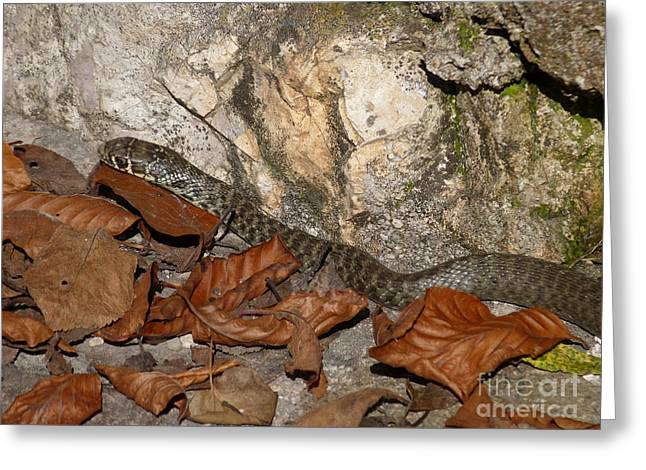 Snake - Autumn Leaves Greeting Card