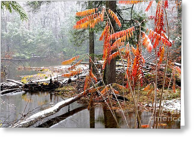 Autumn Snow Cranberry River Greeting Card by Thomas R Fletcher