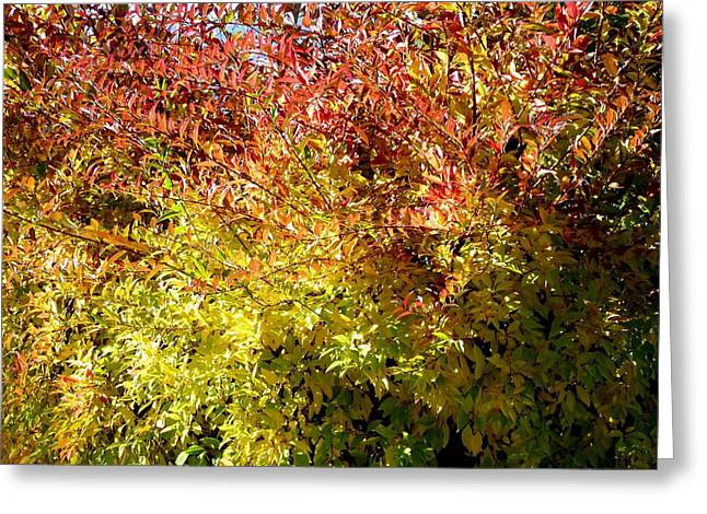 Autumn Splendor 12 Greeting Card by Will Borden