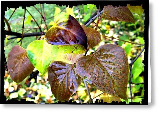 Autumn Splendor 4 Greeting Card by Will Borden