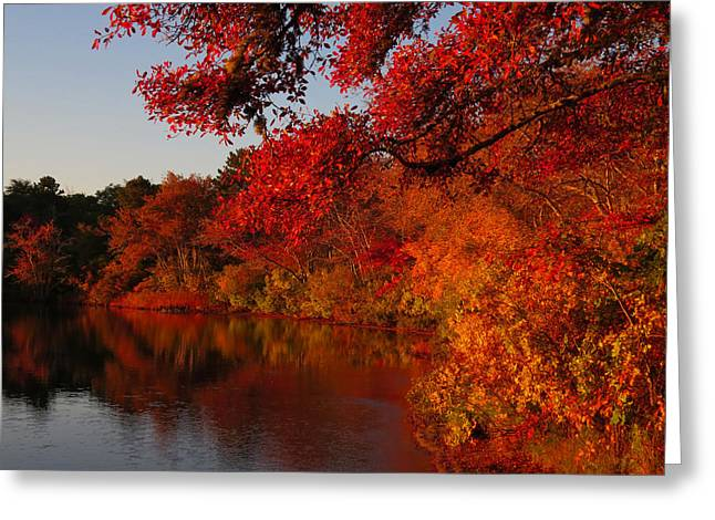 Greeting Card featuring the photograph Autumn Splendor  by Dianne Cowen