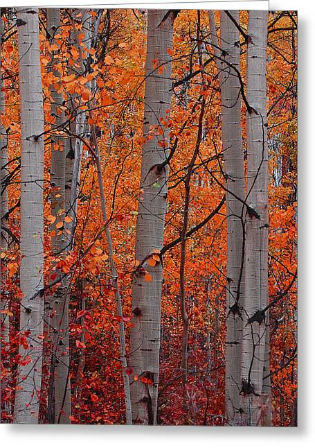 Aspens In Autumn Leaves Greeting Cards - Autumn Splendor Greeting Card by Don Schwartz