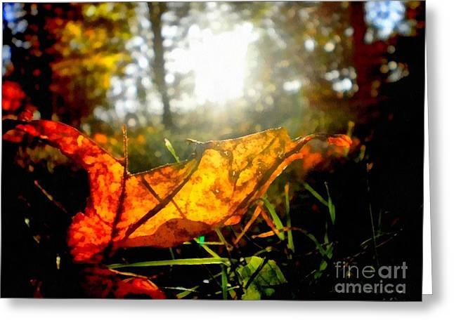 Autumn Splendor Greeting Card by Janine Riley