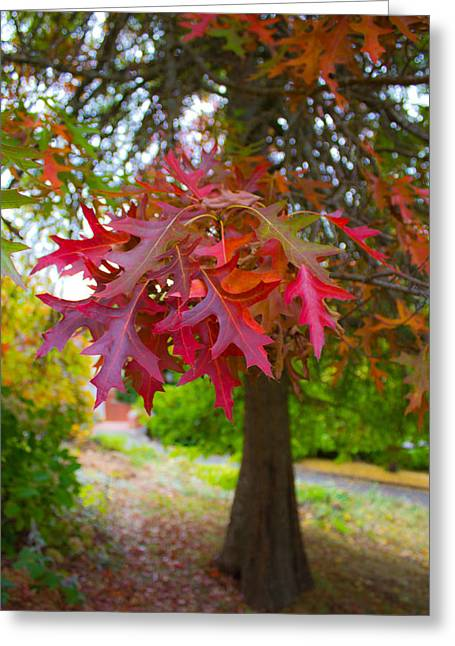Autumn Splendor Greeting Card by Mamie Thornbrue