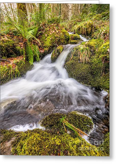 Autumn Stream Greeting Card by Adrian Evans