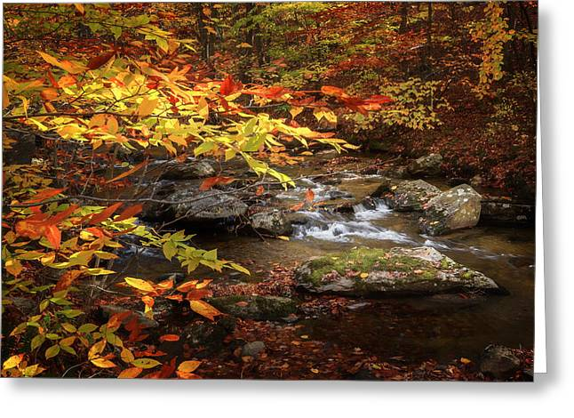 Autumn Stream Greeting Card by Bill Wakeley
