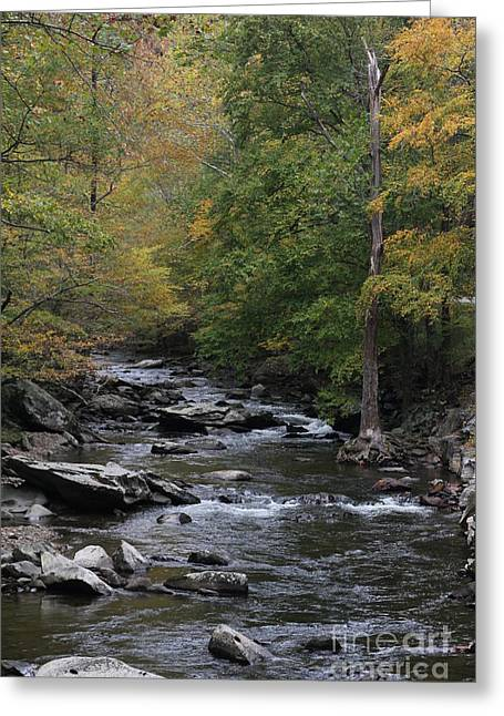 Roaring Stream In The Smokys Greeting Card