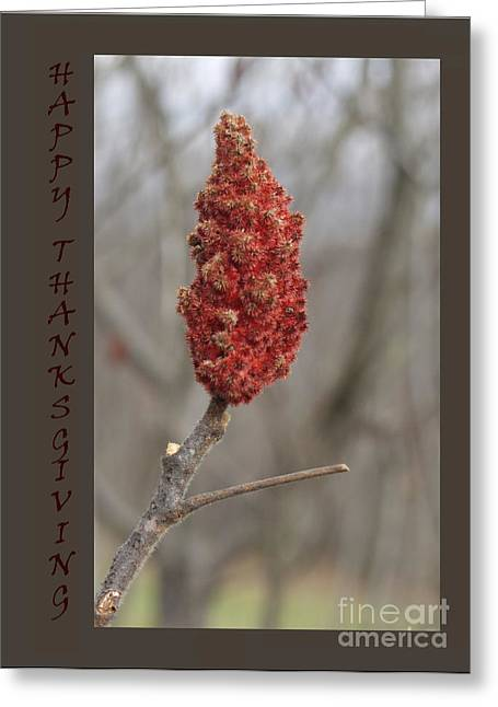 Autumn Sumac  Thanksgiving Greeting Card #1 Greeting Card by Andrew Govan Dantzler