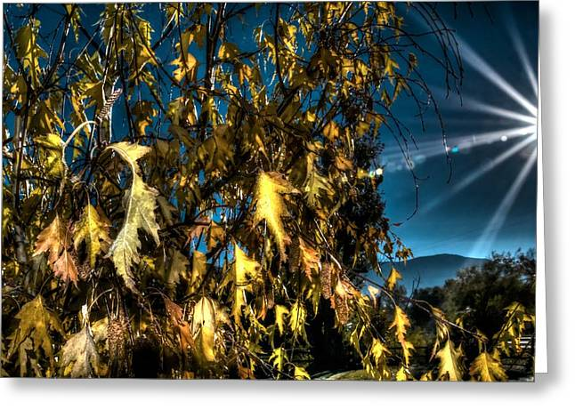 Greeting Card featuring the photograph Autumn Sun by Kevin Bone