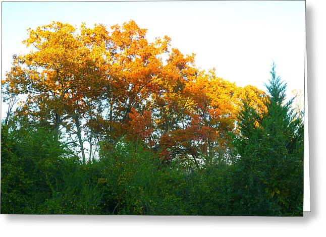 Autumn Sunlight Greeting Card by Pete Trenholm