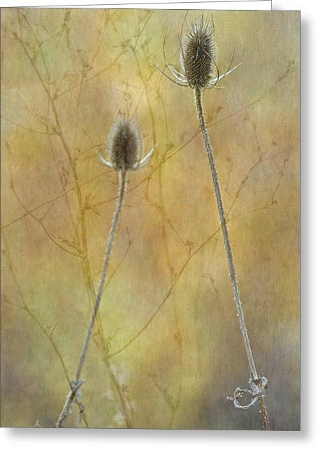Autumn Teasel Greeting Card by Angie Vogel