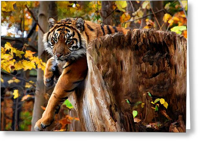 Autumn Tiger Greeting Card by Elaine Manley