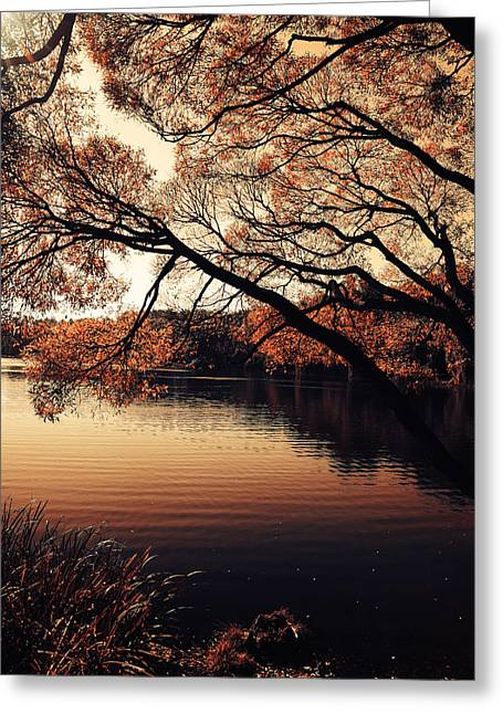 Autumn Time At The Lake Greeting Card by Jenny Rainbow