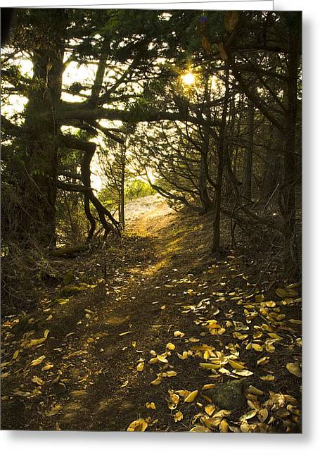 Autumn Trail In Woods Greeting Card