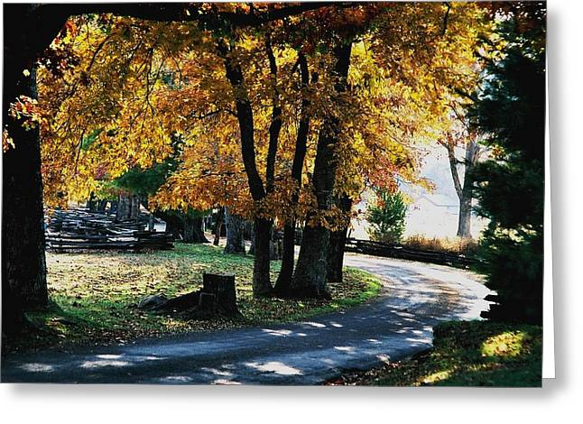 Autumn Trail Greeting Card by John Saunders