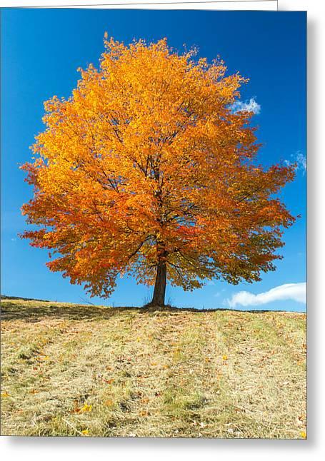 Autumn Tree - 1 Greeting Card