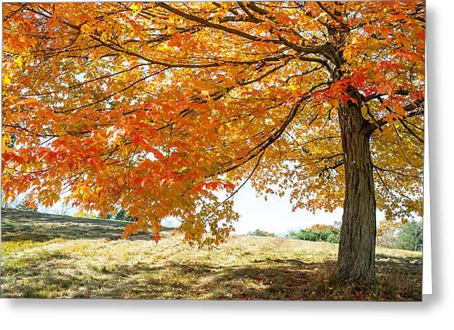 Autumn Tree - 2 Greeting Card