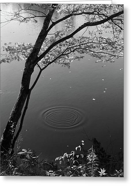 Autumn Tree By Bank Of Pond Concentric Greeting Card