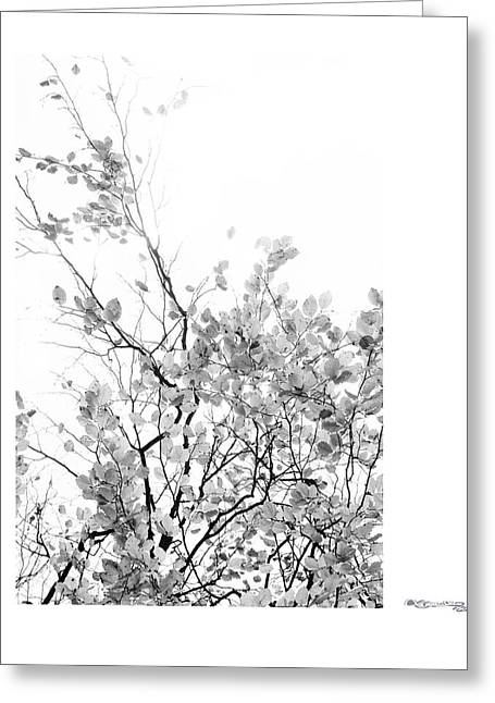 Autumn Tree In Black And White  Greeting Card by Xoanxo Cespon