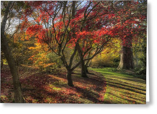 Autumn Tree Sunshine Greeting Card by Ian Mitchell