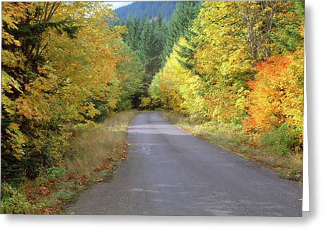 Autumn Trees Along Road In Mt Hood Greeting Card