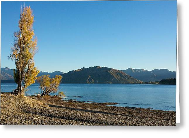 Greeting Card featuring the photograph Autumn Trees At Lake Wanaka by Stuart Litoff