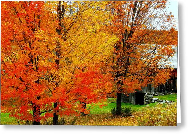 Greeting Card featuring the photograph Autumn Trees By Barn by Rodney Lee Williams