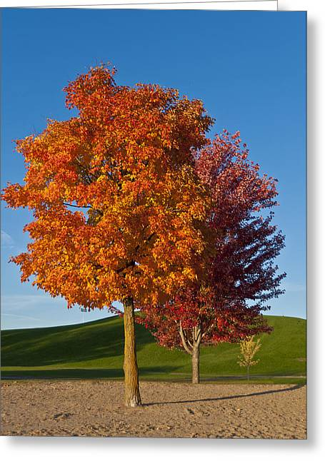 Autumn Trees Greeting Card by Celso Bressan