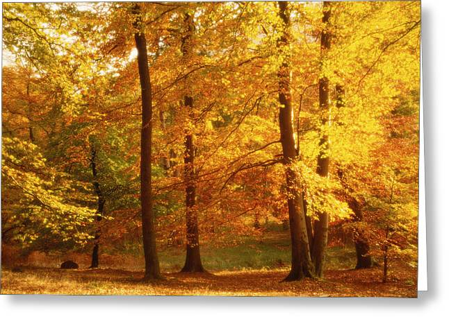 Autumn Trees Cumbria England Greeting Card by Panoramic Images