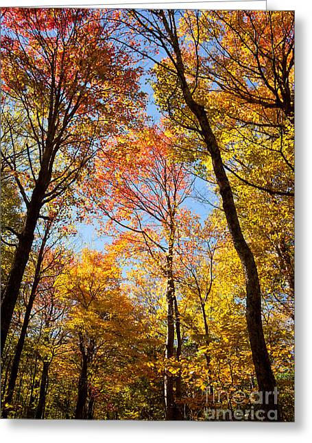 Autumn Trees Greeting Card by Lena Auxier