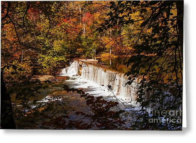 Autumn Trees On Duck River Greeting Card