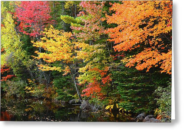 Autumn Trees, Sheepscot River, Palermo Greeting Card