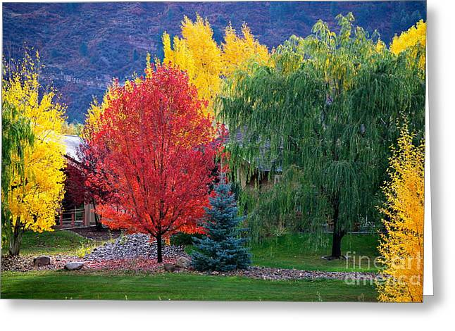 Autumn Trio Greeting Card by Johanne Peale