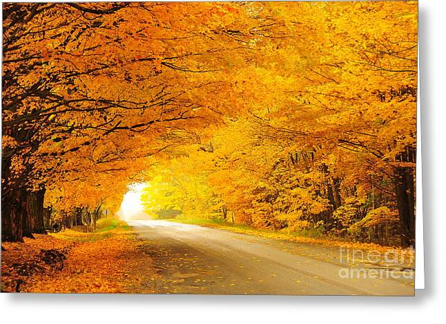 Autumn Tunnel Of Gold 8 Greeting Card