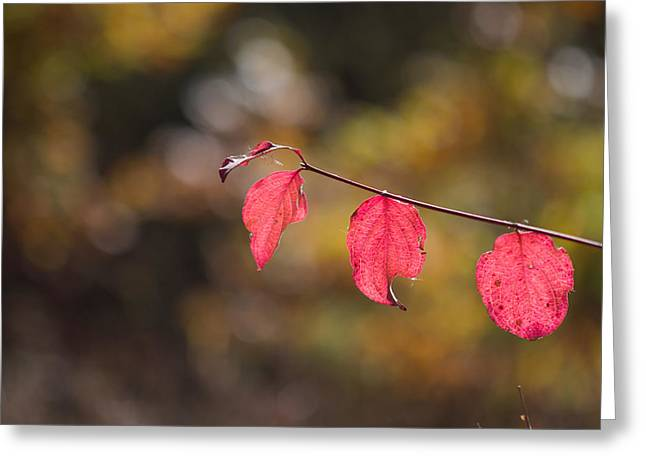 Greeting Card featuring the photograph Autumn Twig With Red Leaves by Jivko Nakev