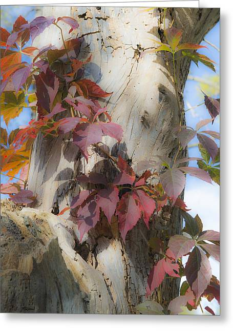 Autumn Veil Greeting Card