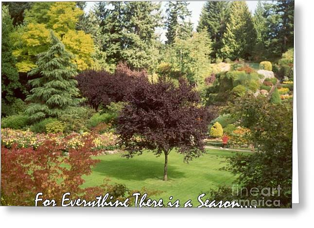 Autumn Victoria Bc Greeting Card by Marlene Rose Besso