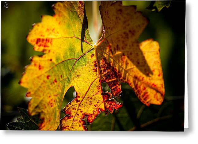 Autumn Vine Greeting Card by Alexander Fedin