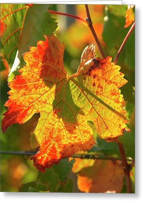 Autumn Vine Leaf, Vineyard Greeting Card by David Wall