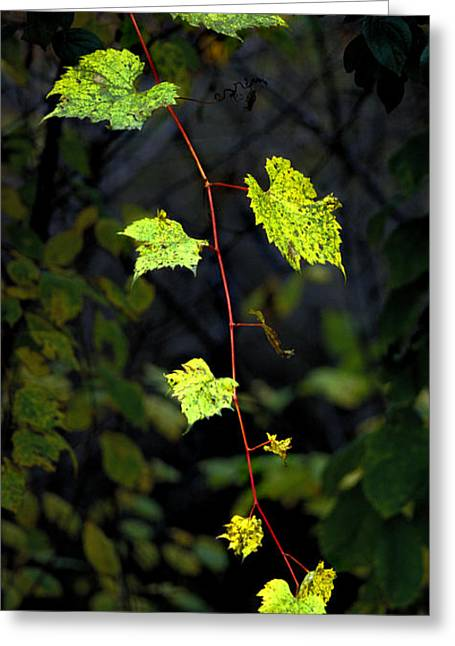 Autumn Vine Greeting Card