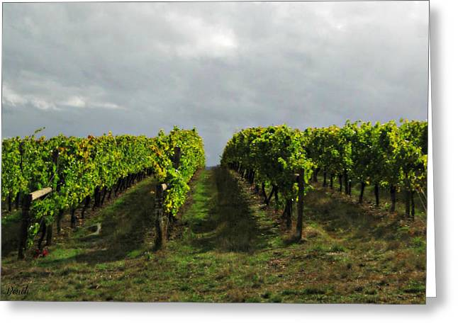 Greeting Card featuring the photograph Autumn Vineyard by Mindy Bench