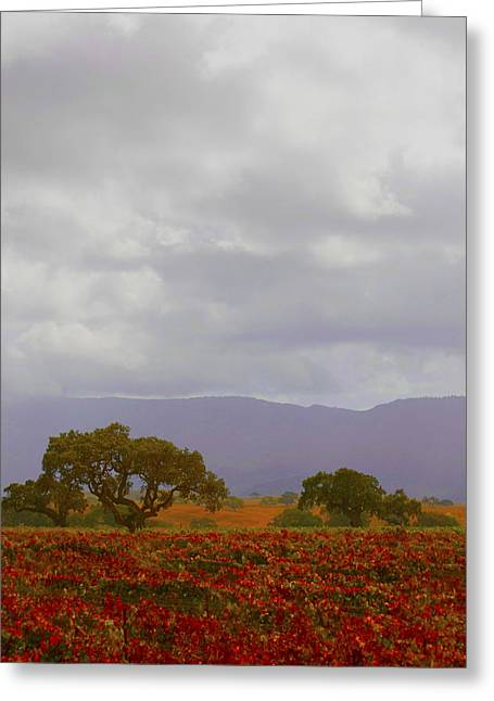 Autumn Vineyard Santa Ynez California Greeting Card by Barbara Snyder