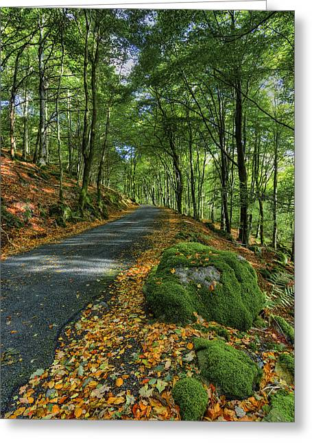Autumn Walk Greeting Card by Ian Mitchell
