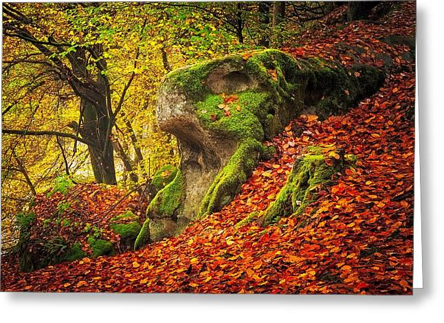 Autumn Walk In Forrest Greeting Card