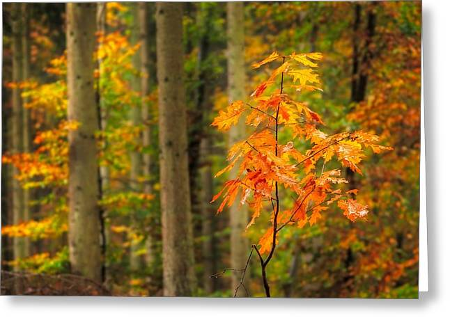 Autumn Walk In The Forest Greeting Card