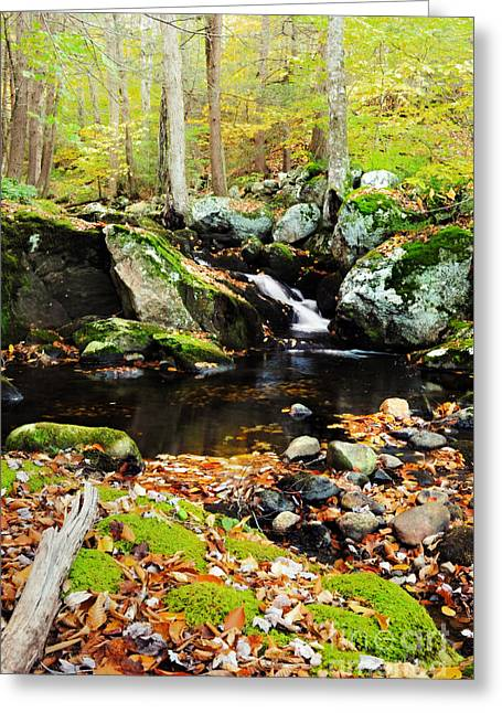 Autumn Waterfall Greeting Card by HD Connelly